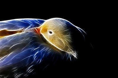 Photograph - Mallard Duck Fractal by Lawrence Christopher