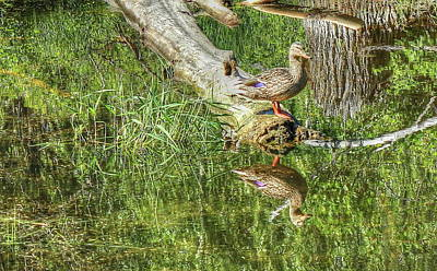 Photograph - Mallard Duck On Log by Jim Sauchyn