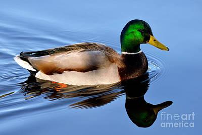 Photograph - Mallard Duck Reflection 2 by Terry Elniski