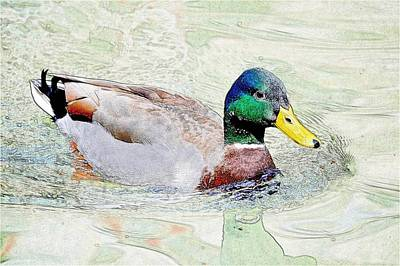 Photograph - Mallard Duck Sketch by Kristina Deane