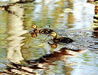 Photograph - Mallard Ducklings by Debbie Oppermann