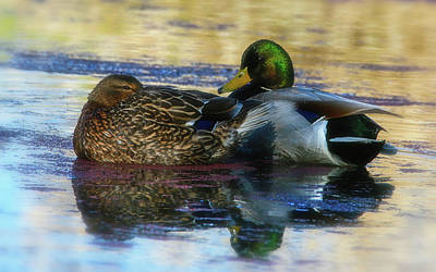 Photograph - Mallard Ducks by Craig Strand