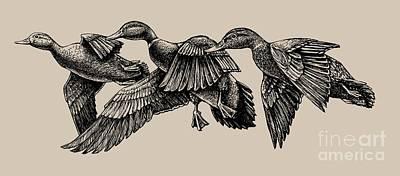 Painting - Mallard Ducks In Flight Bw by Rob Corsetti