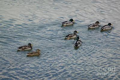 Mallard Ducks In Pond 2 Print by Jean Bernard Roussilhe