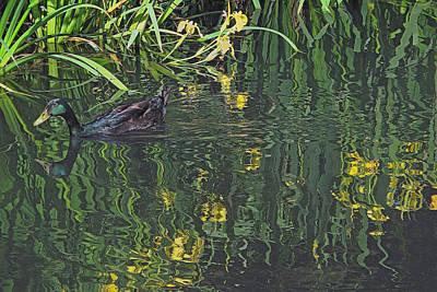Photograph - Mallard In The Marsh by Suzy Piatt
