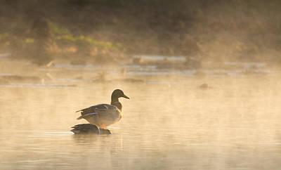 Photograph - Mallard In The Mist by Tam Ryan