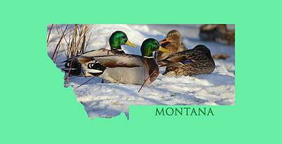 Royalty-Free and Rights-Managed Images - Mallard Montana by Whispering Peaks Photography