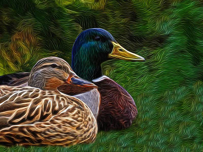 Mallard Pair Digital Art Art Print