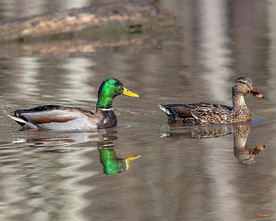 Photograph - Mallard Pair Dwf0173 by Gerry Gantt