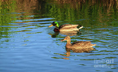 Photograph - Mallard Pair by Robert Bales