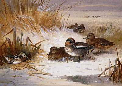 Mallard Duck Painting - Mallard Widgeon And Snipe At The Edge Of A Pool In Winter by Archibald Thorburn