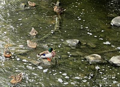 Photograph - Mallards At Graue Mill by Kathie Chicoine