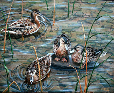 Mallards Art Print by Brenda Baker