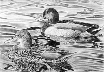 Duck Water Pencil Drawing - Mallards by Craig Carlson