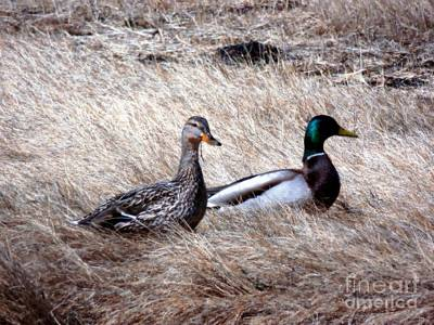 Photograph - Mallards Enjoying The Warmth by Marcia Lee Jones