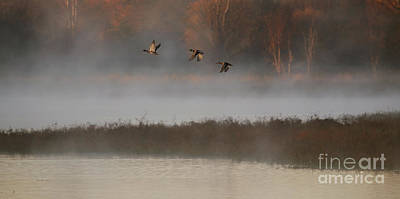Photograph - Mallards In Flight by Elizabeth Winter