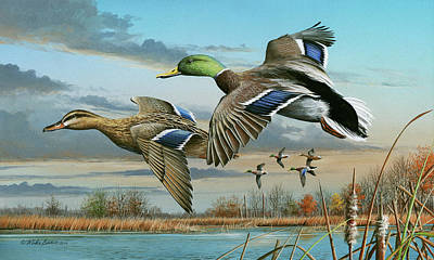 Mallards In Flight Art Print by Mike Brown