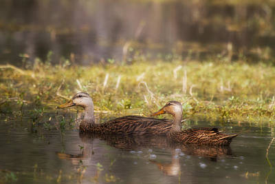 Bird Photograph - Mallards by J Darrell Hutto