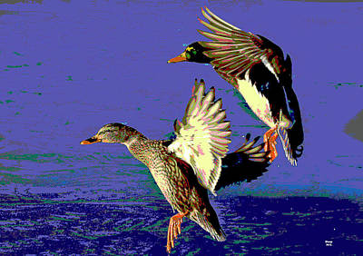 Wood Duck Mixed Media - Mallards Landing by Charles Shoup