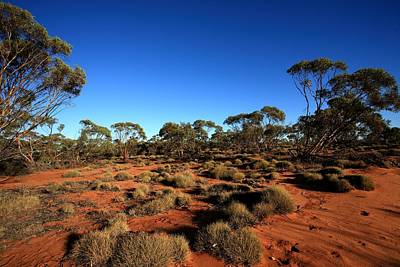 Photograph - Mallee And Spinifex by Tony Brown