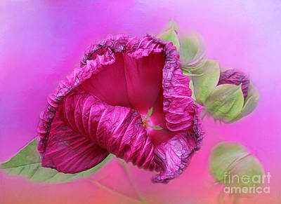 Photograph - Mallow In Mist by Judi Bagwell