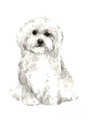Maltese Abstract Dog Poster Art Print