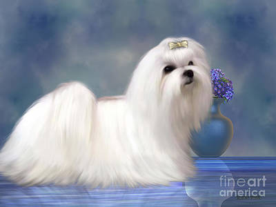 Maltese Dog Art Print by Corey Ford