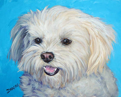 White Dog Painting - Maltese In Sunlight by Dottie Dracos
