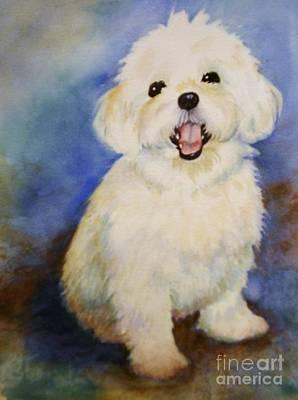 Maltese Named Ben Art Print by Marilyn Jacobson
