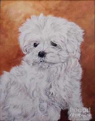 Maltese Puppy Original by Graciela Castro