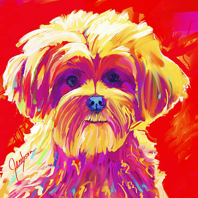 Pitbull Painting - Maltipoo 1 by Jackie Jacobson