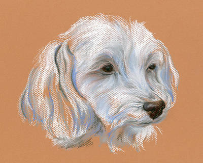 Pastel - Maltipoo Portrait by MM Anderson