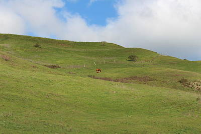 Photograph - Mama And Baby Calf On Hillside by Lucie Buchert