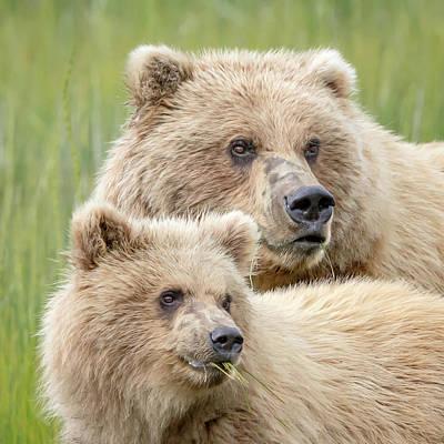Photograph - Mama Bear by Jack Bell