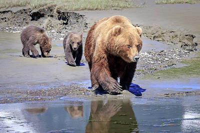 Photograph - Mama Bear Leads The Way by Jack Bell