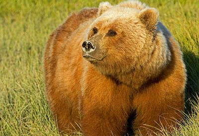Photograph - Mama Bear by Shari Sommerfeld