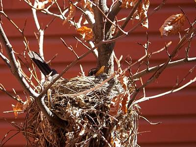 Photograph - Mama Bird by Angi Parks