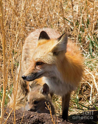 Photograph - Mama Fox And Kits by Steve Krull