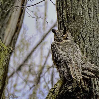 Photograph - Mama Great Horned Owl by LeeAnn McLaneGoetz McLaneGoetzStudioLLCcom