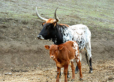 Steer Painting - Mama Longhorn And Baby 3 by Barbara Snyder