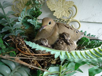 Photograph - Mama Morning Dove by Leslie Manley