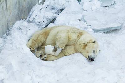 Mama Polar Bear Playing With Her Child. Art Print by Andrey Tsvirenko