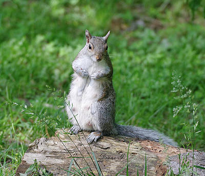Photograph - Mama Squirrel by Diane Giurco