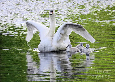 Photograph - Mama Swan And Babies by Janice Drew