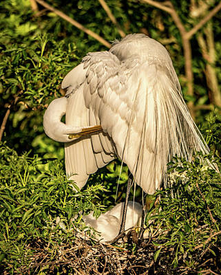 Photograph - Mama White Egret by Jane Luxton