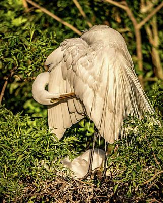 Photograph - Mama White Egret by Jane Luxton