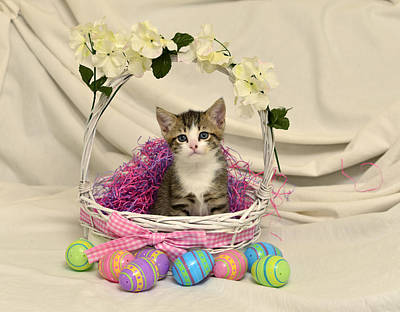 Photograph - Mama's Girl In Easter Basket by Cindy McIntyre