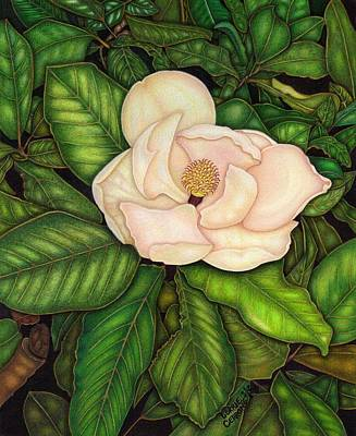 Magnolia Flower Drawing - Mama's Magnolia by Lorrie Cerrone