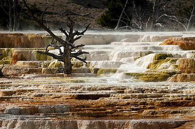 Mammoth Hot Springs Beauty Original by Chad Davis