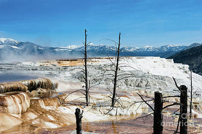 Photograph - Mammoth Hot Springs Desolation by Thomas Major